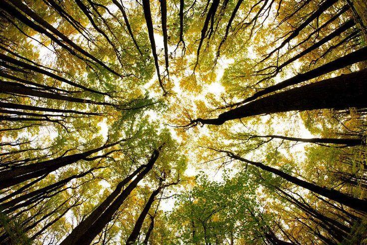 Uma vista através de um dossel de árvores na cor do outono em 24 de outubro de 2015 ao longo do skyline no parque nacional de Shenandoah, na Virgínia.   Milhares de visitantes foram ao parque no sábado criando milhas de congestionamento de tráfego em todas as entradas, fazendo o controle de tráfego um pesadelo para a polícia