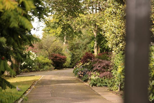 Secret Garden in the centre of Aberdeen? Johnston Gardens, Aberdeen, Scotland