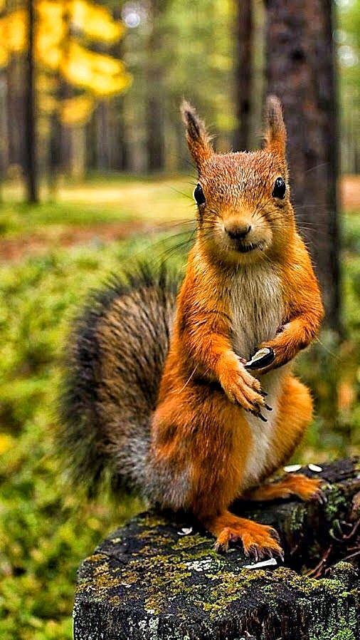 Сибирь день, картинки лесных животных смешные