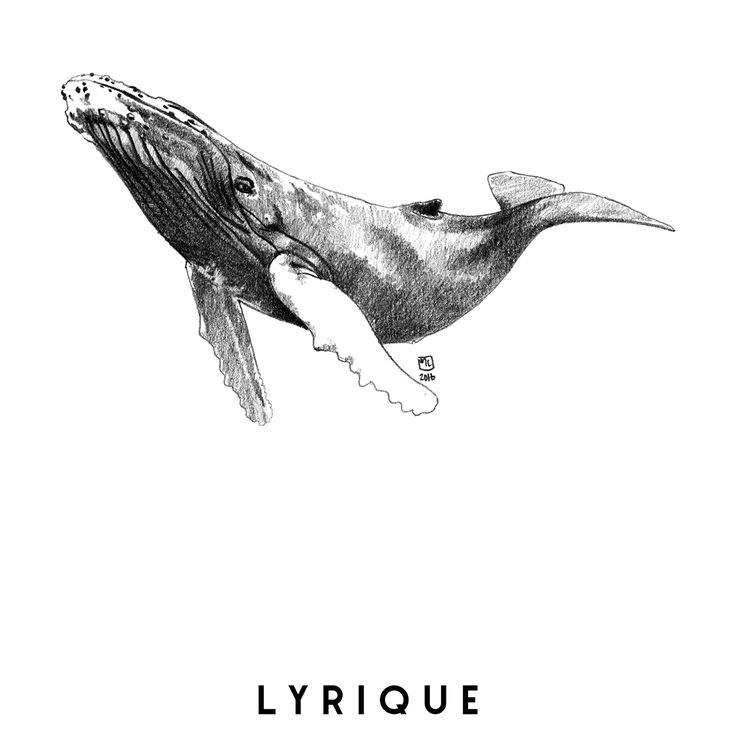 Marie Casaÿs, Animal Totem, illustration, pencil drawing, dessin crayon, baleine à bosse, lyrique, humpback whale, lyrical