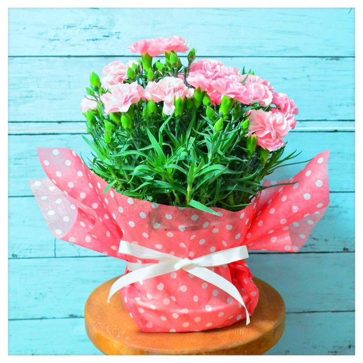 Best of mother's day. * #flowers #flowerslovers #flowerstagram #mothersday #florist #japan #pinkflower #nature #plant #natural #beautiful #flowerlover #sweet #flower #organic #instagood #love #happy #beauty #japan #blossom #bloom #carnation * 母の日1番人気でした�� * #カーネーション  #お花 #植物 #自然 #癒し #花のある暮らし #写真好きな人と繋がりたい http://gelinshop.com/ipost/1516167768588023909/?code=BUKgo1ylfhl