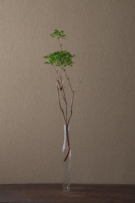 2012年1月11日(水) 馬酔木はとても好きな花材です。常に若く、古代を感じます。 花=馬酔木(アセビ)、衝羽根(ツクバネ) 器=古ガラス細瓶(20世紀)