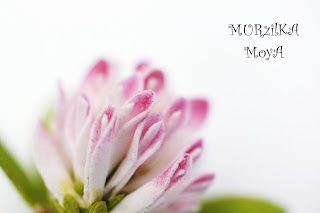 MURzilKA MoyA: Клевер