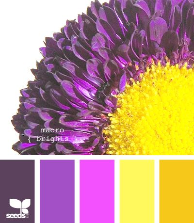 macro brightsColors Pallets, Design Seeds, Bedrooms Colors, Room Colors, Living Room, Colors Palettes, Colors Schemes, Macro Bright, Bright Colors Bathroom