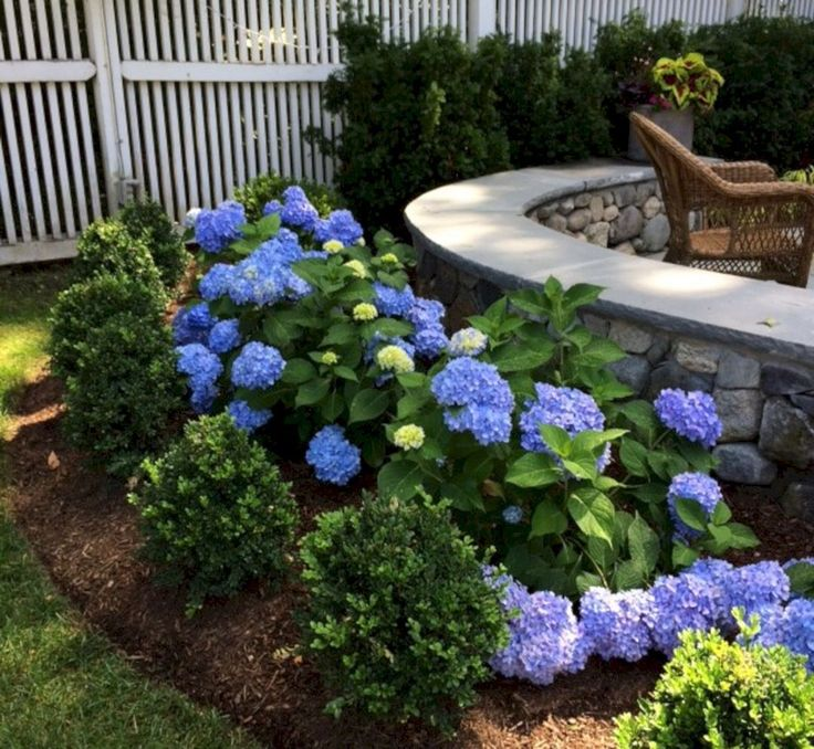 50 Most Beautiful Hydrangeas Landscaping Ideas To Inspire