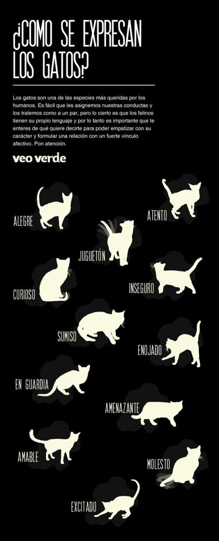 12 Infográficos prácticos que todo amante de los gatos necesita