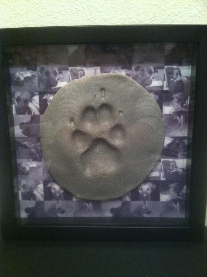8 Best Shadow Box Ideas For A Dog Memorial Images On