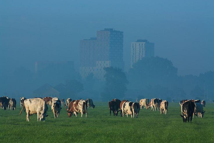 Zoetermeer, Holland  #heritage #culture #mytumblr