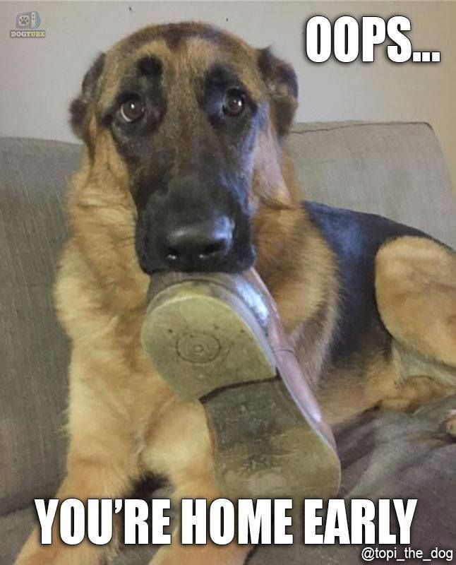 The German Shepherd. Well that certainly looks like my baby's face when Ii come home. LOL