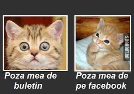 imagini-amuzante-poze-haioase-poza-buletin-vs-poza-facebook-pisica.jpg (470×330)