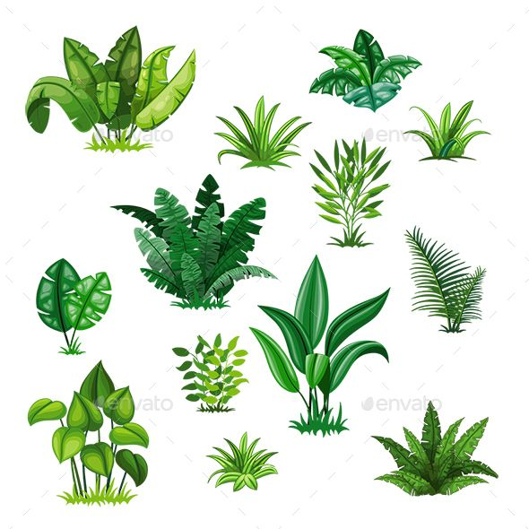 Set With Different Tropical Plants Plant Cartoon Tropical