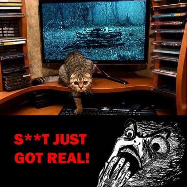 Hilarious take on The Ring.Laugh, Creepy Cat, Watches Scary, Funny Stuff, Humor, Funny Animal, Scary Movie, Rings Cat, Kitty