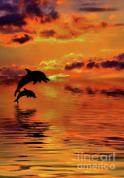 A glowing sunset of orange and yellow with clouds reflecting on the golden water and two silhouetted dolphins jumping for joy.  Dolphin Silhouette Sunset by Kaye Menner Photography Quality Prints Cards Products at:  https://kaye-menner.pixels.com/featured/dolphin-silhouette-sunset-by-kaye-menner-kaye-menner.html