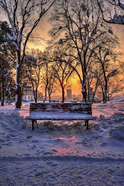 Bench in a park in winter, Belgrade, Serbia. I do not think I would like to sit here, tooo cold.