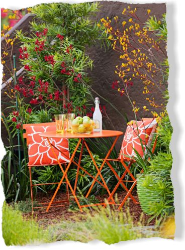 Beautiful Australian plants