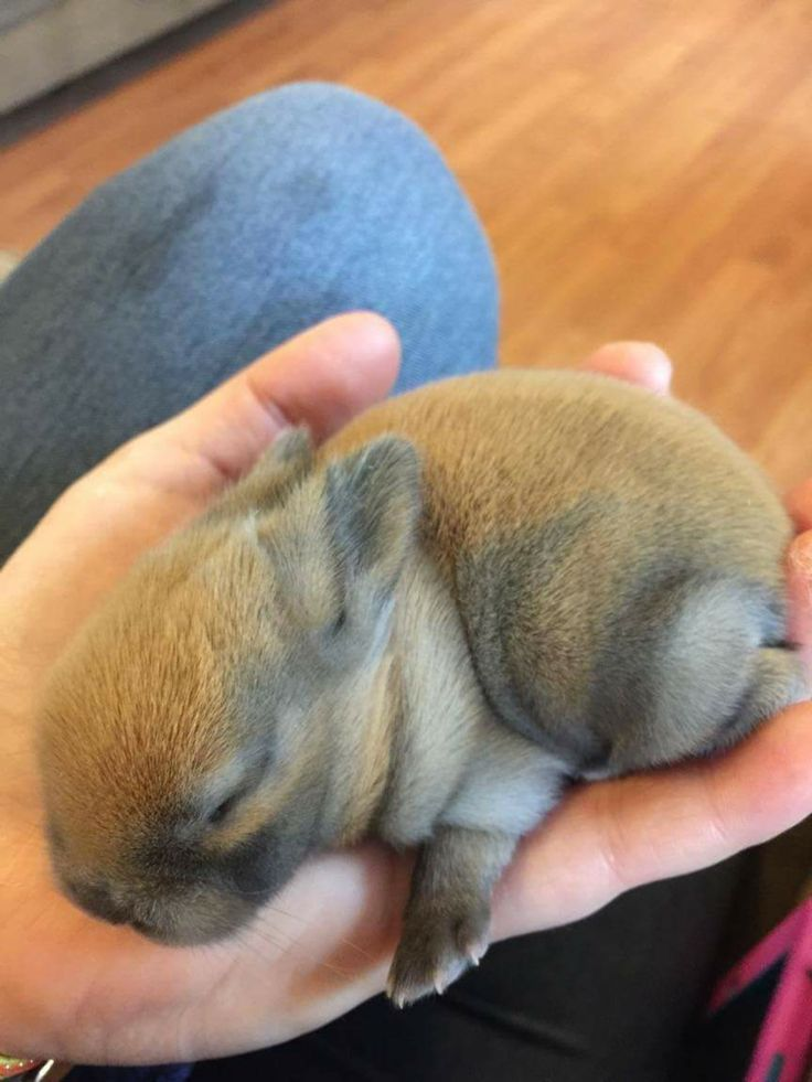 7 day old New Zealand baby bunny Baby bunnies, Old and