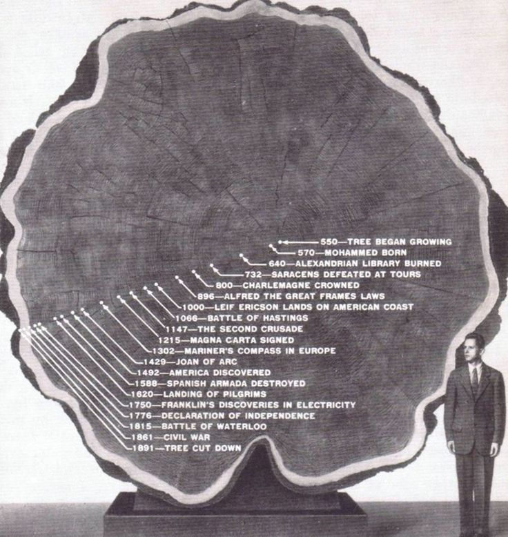 "The life of the ""Mark Twain Tree,"" an ancient sequoia felled in 1891. Slices of its trunk were sent to the New York and London Museums of Natural History."