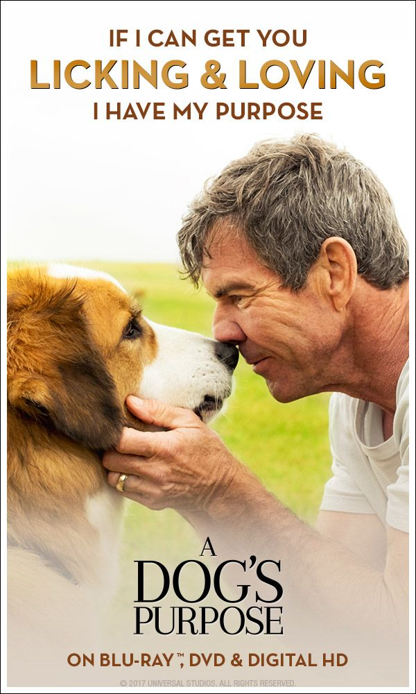 "A Dog's Purpose is full of ""genuine heart, humor and a real message of love"" (The Plain Dealer). Own it on Blu-ray, DVD & Digital HD."