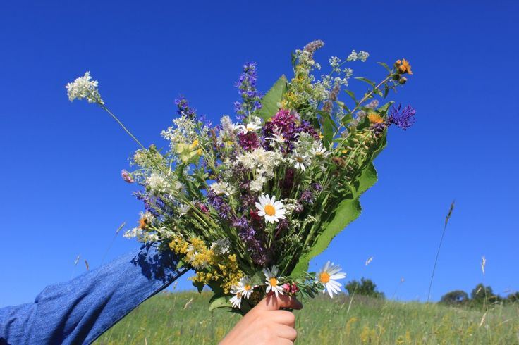 Wildflowers Bouquet over Blue Sky - Public Domain Photos, Free Images for Commercial Use