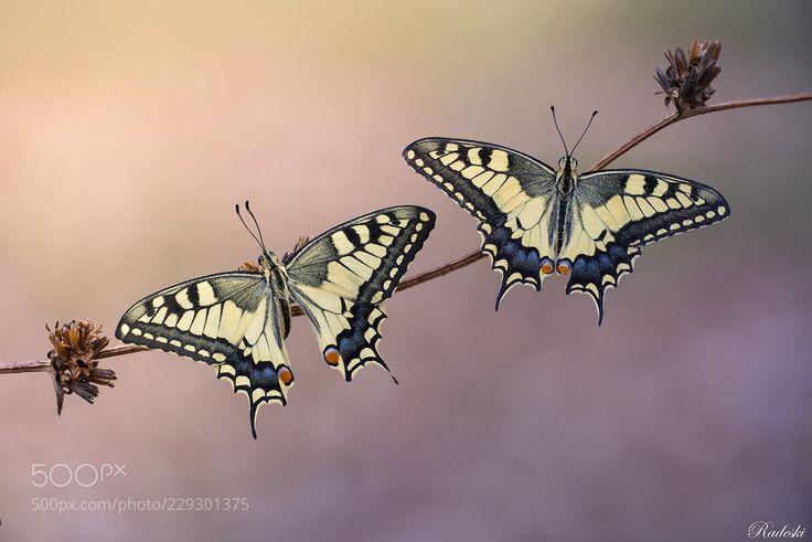 Una coppia perfetta  (Roberto Aldrovandi / Reggio Emilia / Italia) #nikon D800E #macro #photo #insect #nature