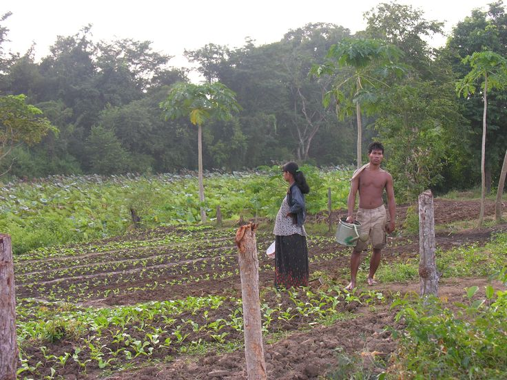 A village behind Beng Melea and a vegetable garden - does she not look glorious ?