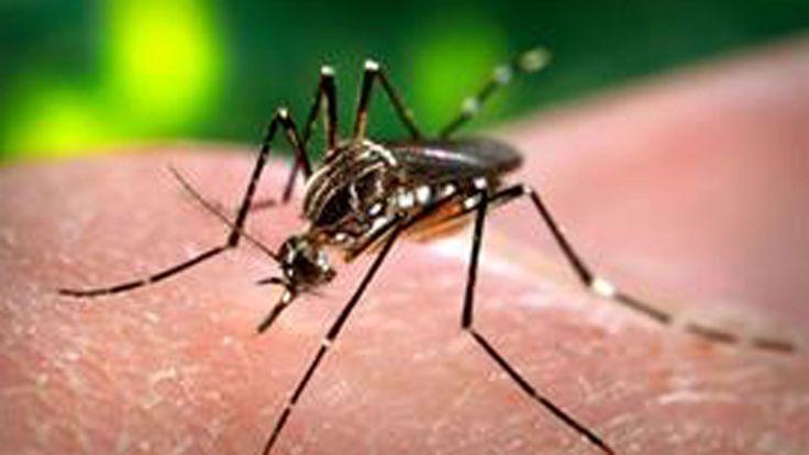 #Confirman las primeras dos muertes por dengue en la ciudad de Buenos Aires - LA NACION (Argentina): LA NACION (Argentina) Confirman las…