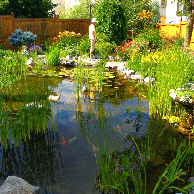 19 best images about tratamiento aguas on pinterest for Garden pond overflow pipe