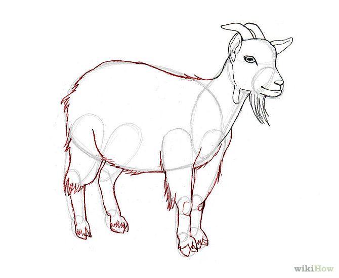 billy goat sketch