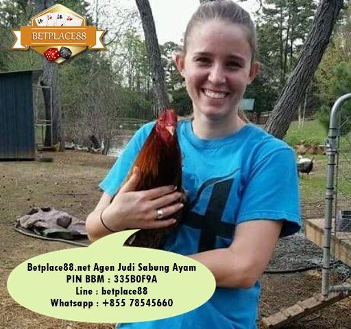 Judi sabung ayam online secara live video di S128 - Daftar Accountnya via Betplace88.net (Agen Resmi S128) - Minimal deposit Rp 100.000 support rek BCA, Mandiri, BNI dan BRI => Pin BB : 335B0F9A / Line : betplace88 / Whatsapp : +8557855660