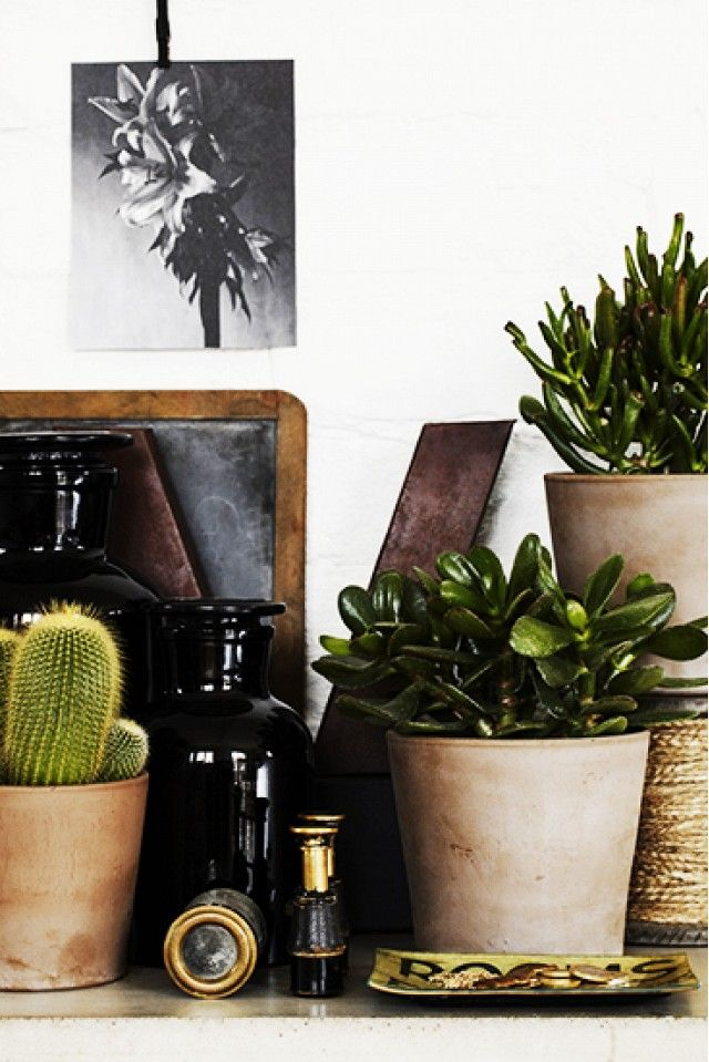 Best Desk Plants For The fice WoodWorking Projects & Plans