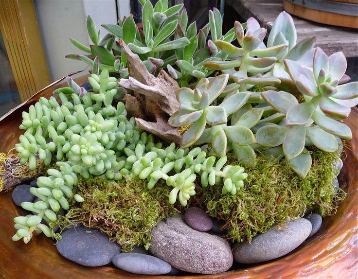 17 best images about jardin on pinterest gardens terra - Decorar un jardin ...