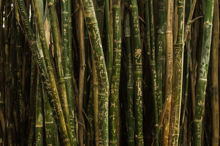 """""""projected temperature increases in China over the next century will likely seriously hinder bamboo, almost the sole source of food for endangered pandas."""""""