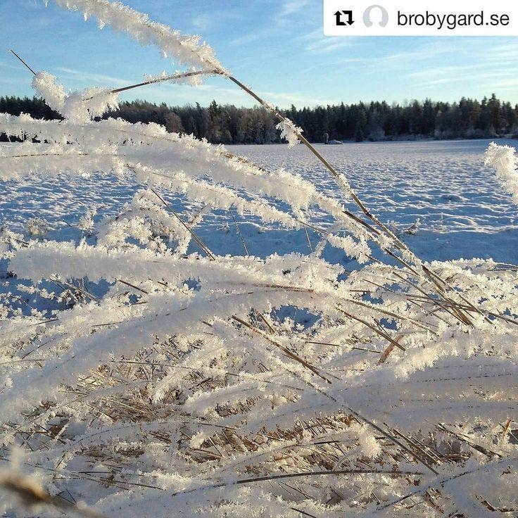 #Repost @brobygard.se (@get_repost)  God Jul och Gott Nytt År  Tack till Alla utställare och besökare som förgyllt vårt galleri café butik 2017 Vi öppnar åter 3/3 2018 Var rädda om Er
