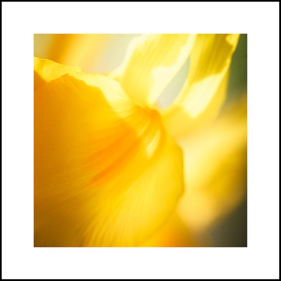 Abstract Yellow Flower Art Print  Yellow Art by CrionnaPhotography, $25.00