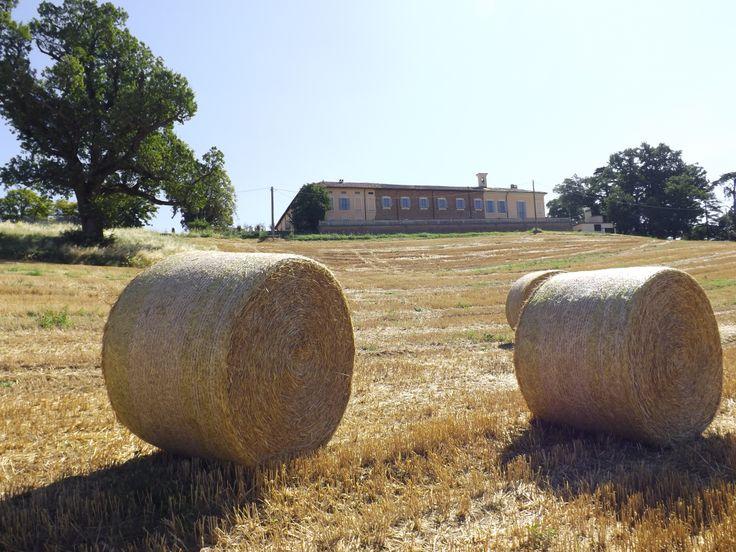 Dal campo di grano (dopo la mietitura)