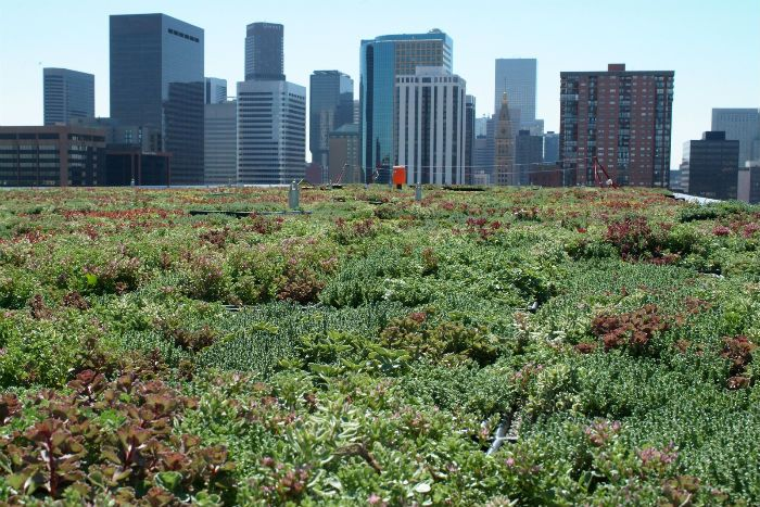 The surface area of green roofs installed in 2013 grew by 10 per cent over 2012, Green Roofs for Healthy Cities (GRHC) reports.