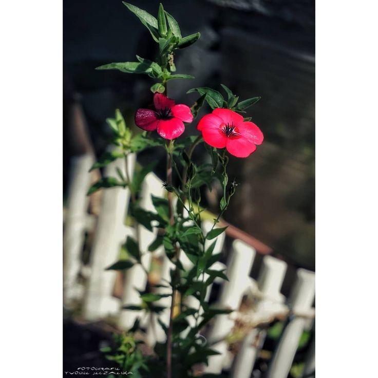 #pflanze #nature #germany #macro #Pflanzen #sonyalpha6