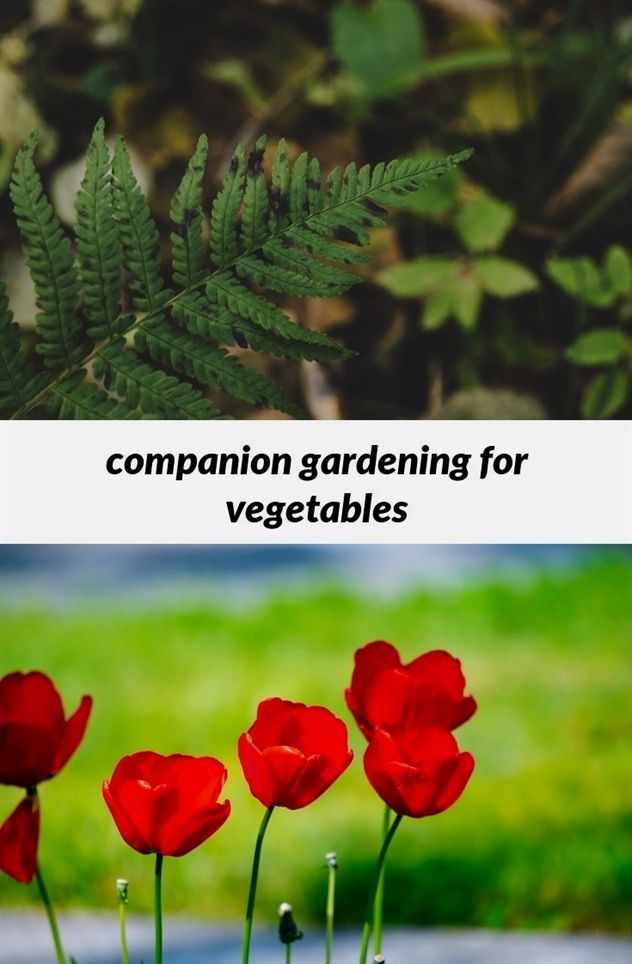 companion #gardening for vegetables_254_20180822100412_53 short ...