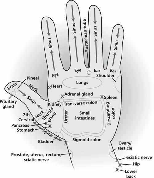 Hand reflexology chart:
