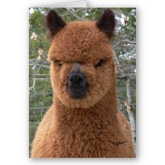 Best Alpaca Llama Love Images On Pinterest Llama Alpaca - 22 hilarious alpaca hairstyles