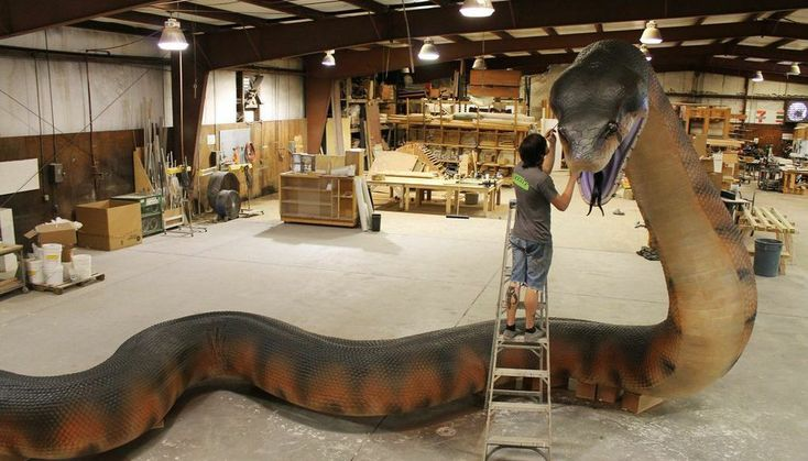 Jacksonville Zoo unveils Titanoboa replica - the largest snake ever.