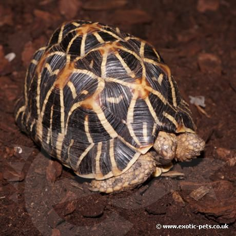 842 Best Images About Tortoises On Pinterest Madagascar