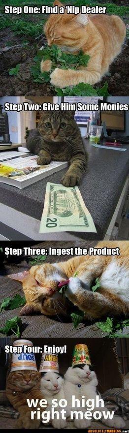 funny........Laugh, Catnip, Crazy Cat, Funny Stuff, Humor, Cat Nip, So Funny, Kitty, Animal