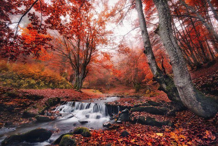 Осенние фотографии, добавляем движение. Урок по фотосъемке