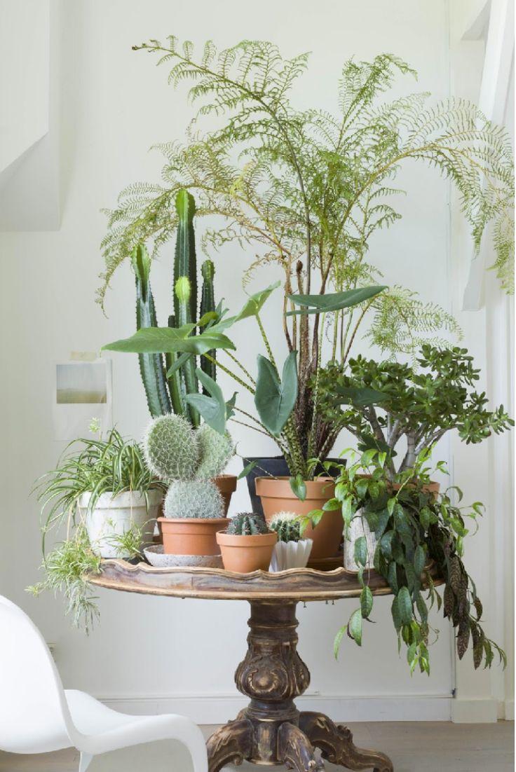 8x planten stylen in huis