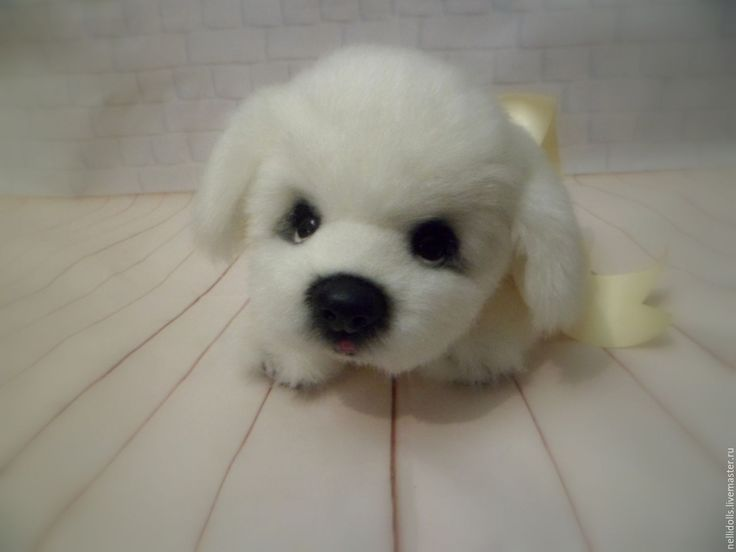 Купить Щенок Белый - белый, щенок, щенок тедди, игрушка, игрушка в подарок, ручная работа