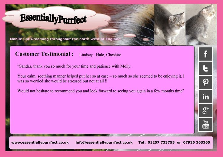Customer Testimonial of EssentiallyPurrfect #mobile #Exotic #cat #catgrooming service.  Lindsey #Hale #Altrincham #Cheshire
