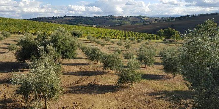 Gran Tour d'Italia, le Marche: una regione al plurale