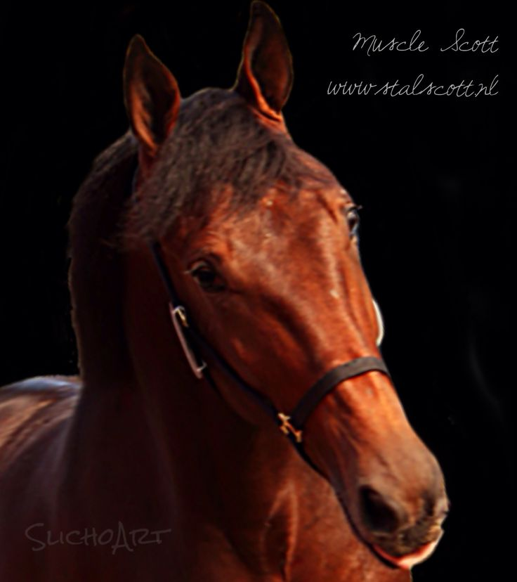Yearling (stallion) from Stal Scott. Sold in Hamburg on October 11th
