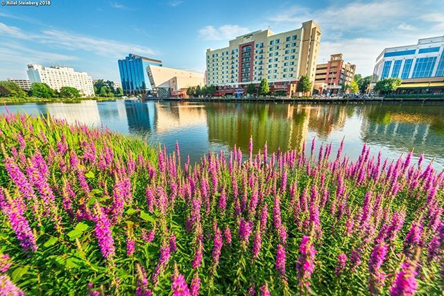 Rio Gaithersburg Md >> A Wide Angle Summer View Of The Rio Washingtonian Center In